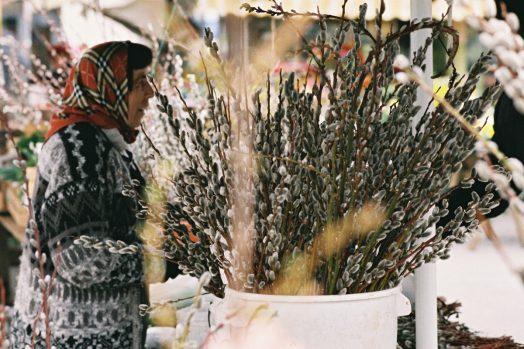 Regionale Blumen, Foto: Diagonale/Paul Pibernig